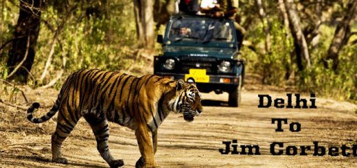 Delhi to Jim Corbett | Spine Tourer