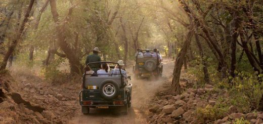 Mumbai to Jim Corbett | SpineTourer