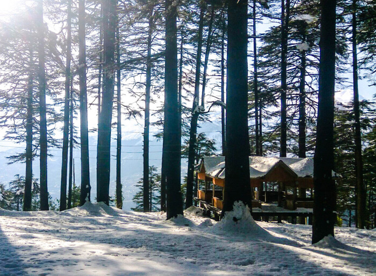 Honeymoon in Patnitop Kashmir - SpineTourer