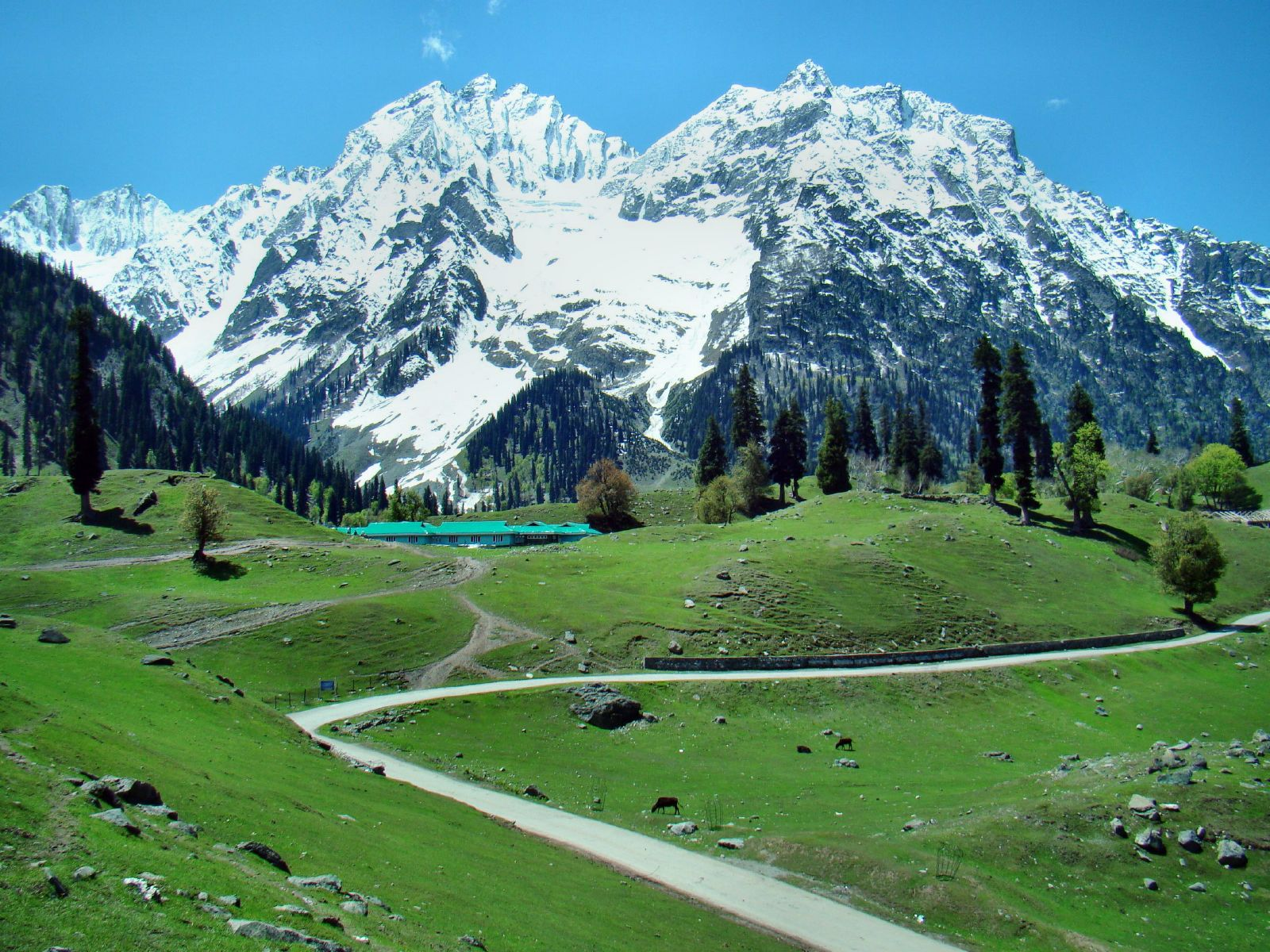 Honeymoon in Sonmarg - SpineTourer
